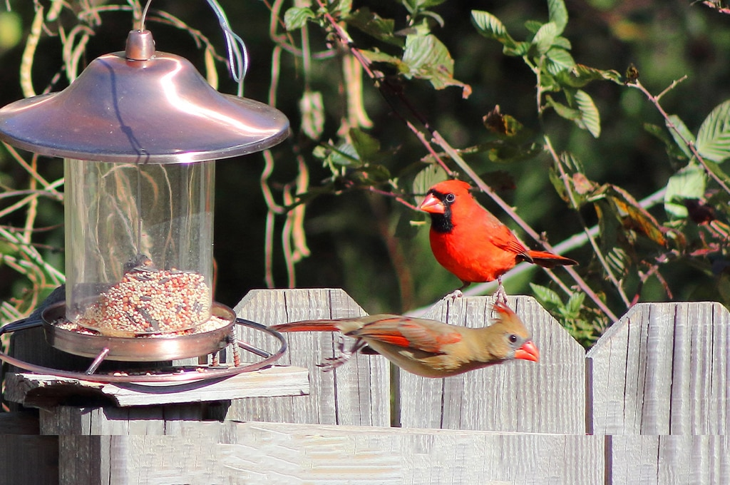 whats the best food to put in bird feeders