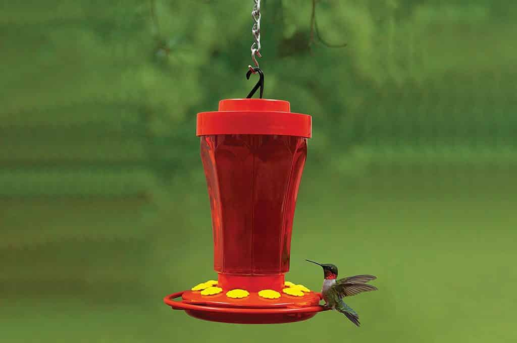 best humming birds feed