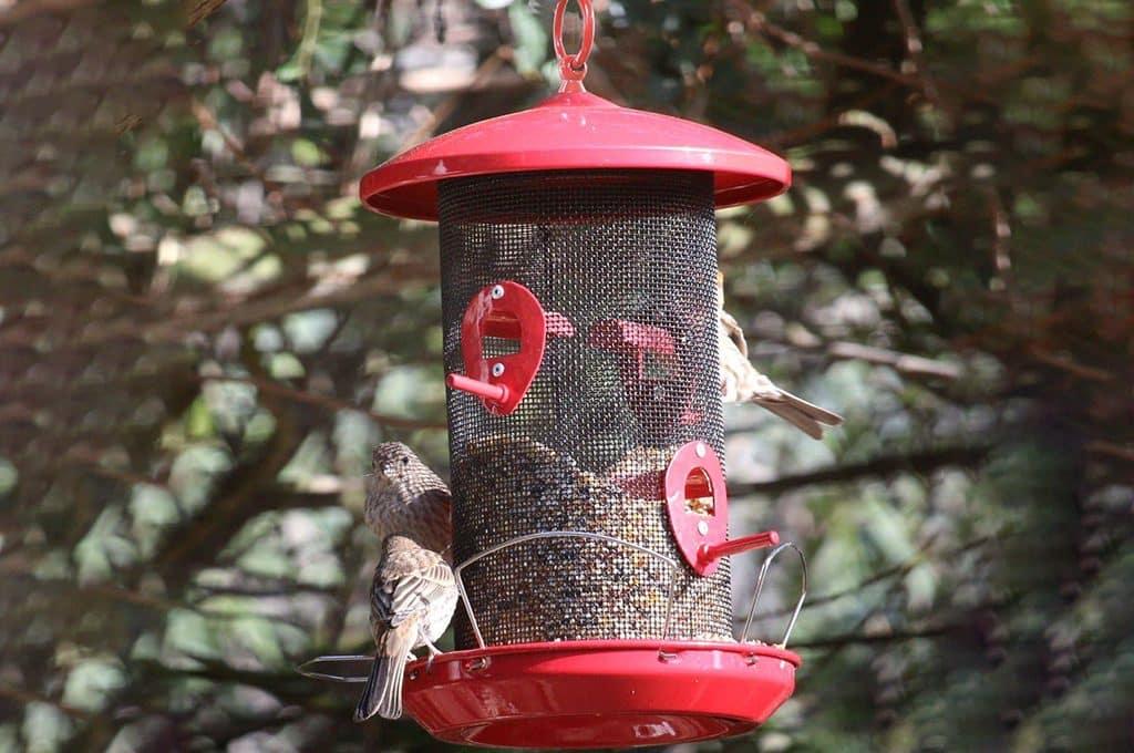 how do birds find bird feeders