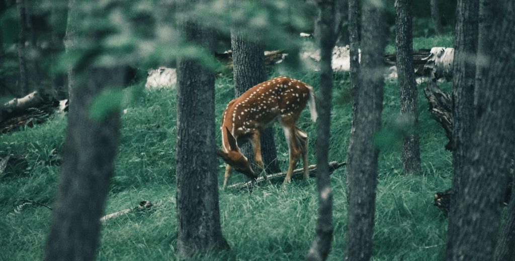 how to hunt deer 2