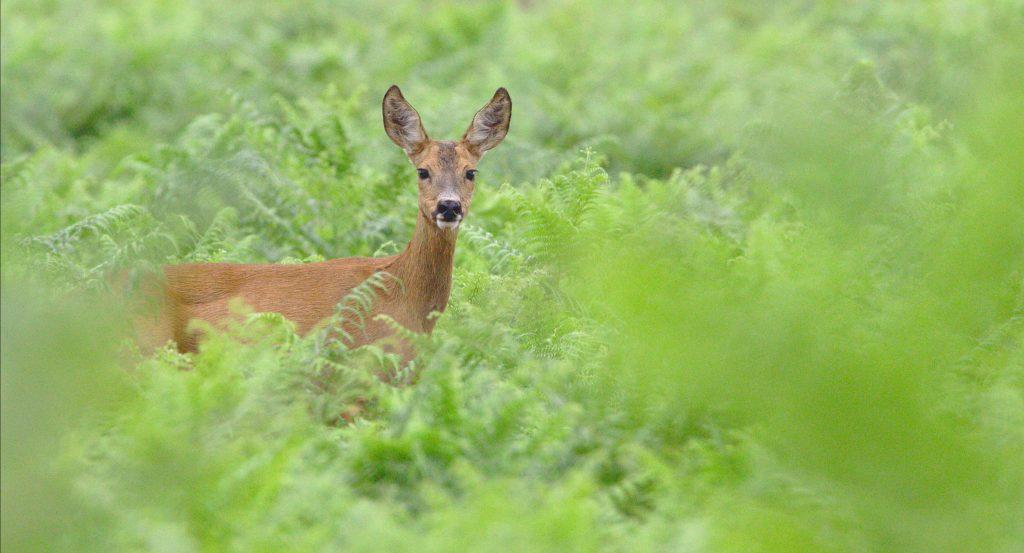 how to hunt deer 3