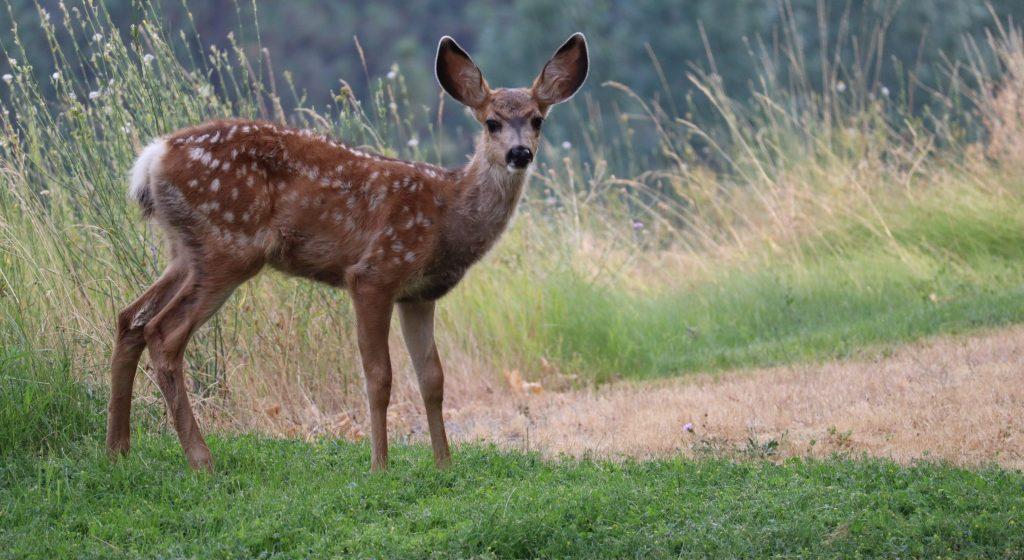 how to hunt deer 1